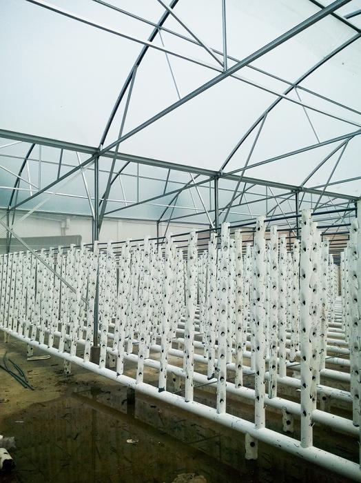 Nhà kính trồng rau thủy canh